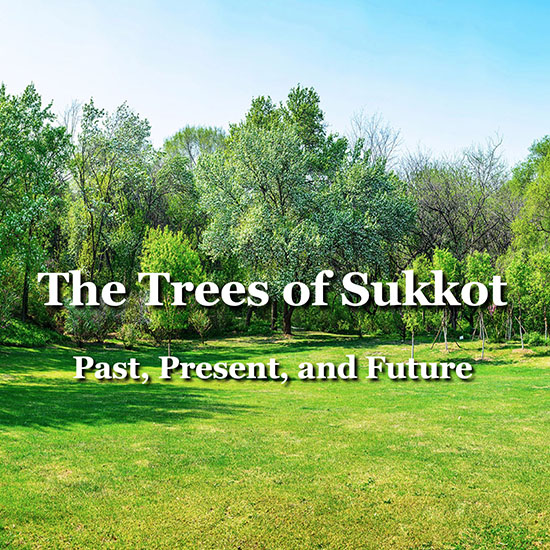 The Trees of Sukkot - Title Slide